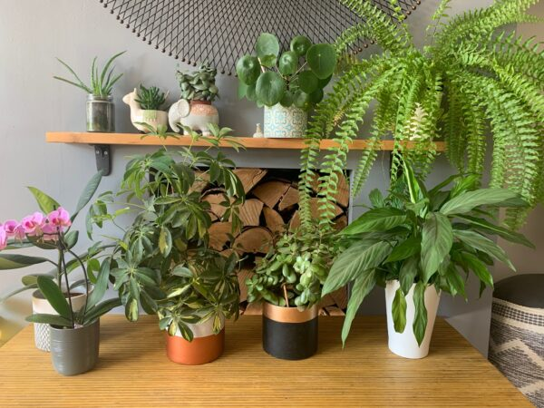easy to grow indoor house plants