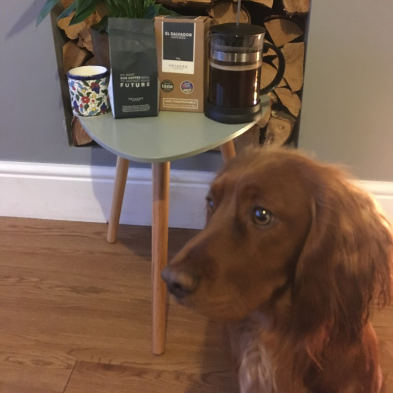 voyager coffee next to murphy dog