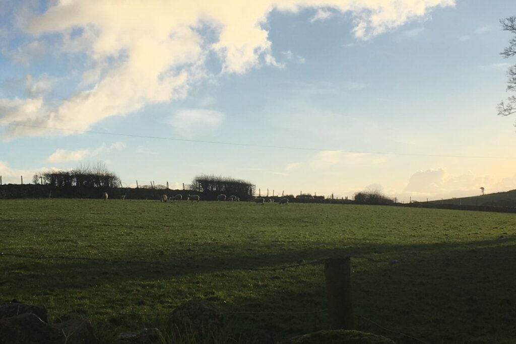 view outside of the pigsty of green fields with sheep in and blue skies