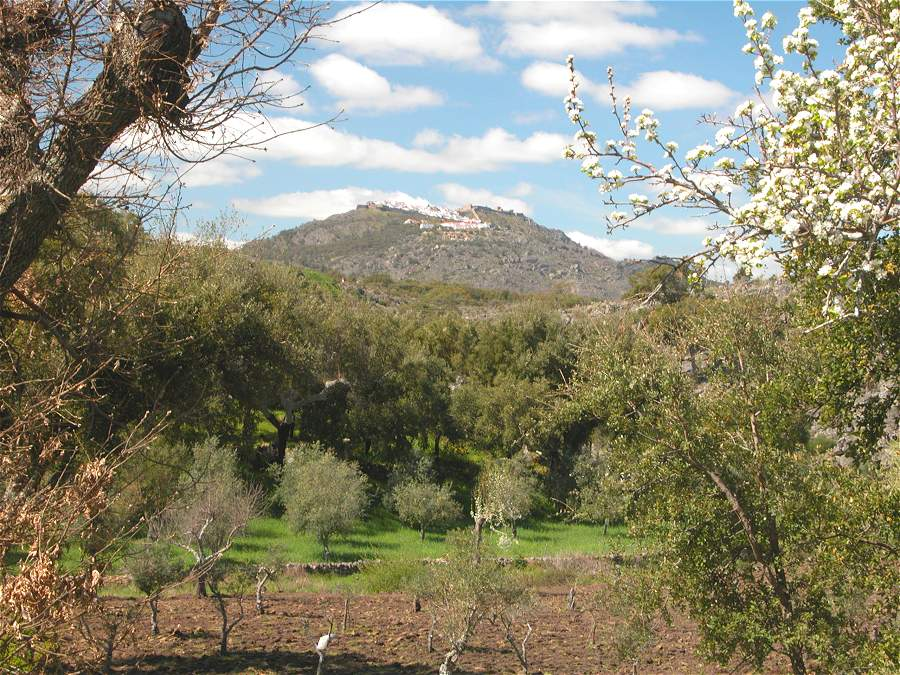 Cork oak landscape in Portugal with young cork and olive trees, a large chestnut to the left and cherry tree to the right