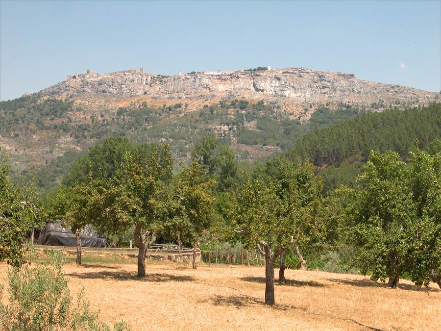 cork oak landscape in south portugal