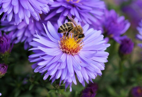 Pollinating plants attracting a bee