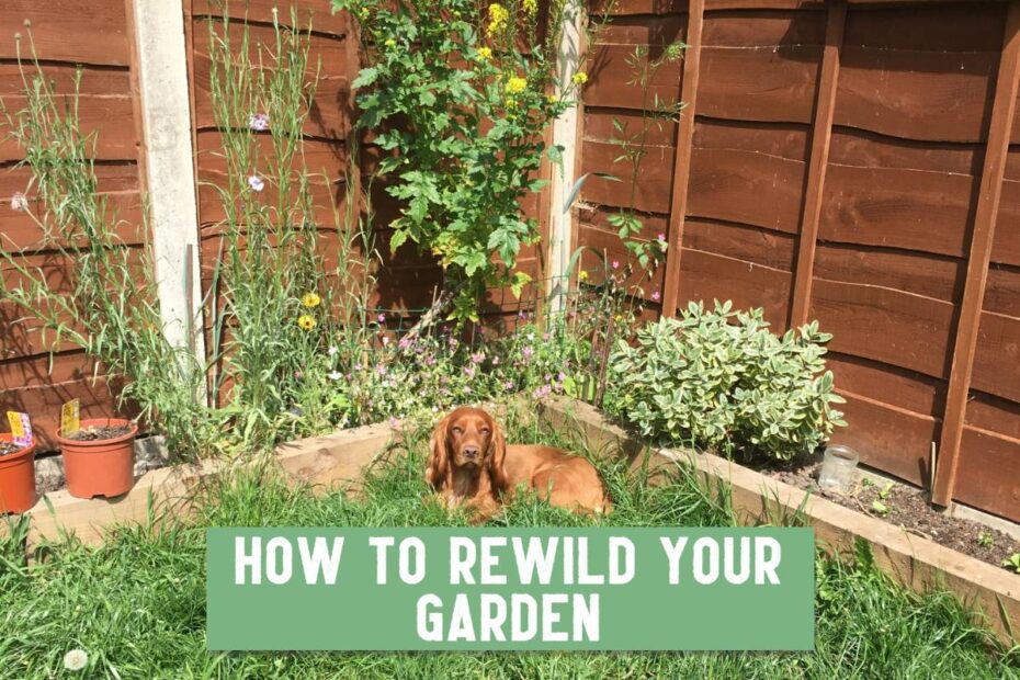 how to rewild your garden on a small scale title
