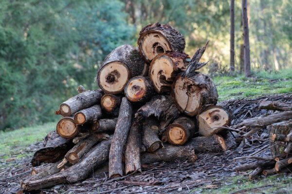 wood pile of logs and twigs perfect for rewilding your garden