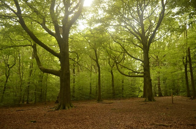ancient woodland of ecclesall woods sheffield