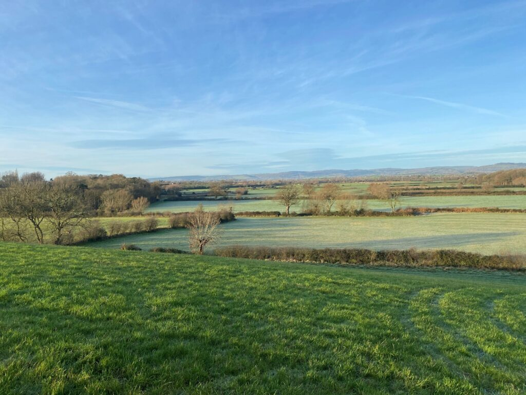 elmore court rewilding project in gloucestershire