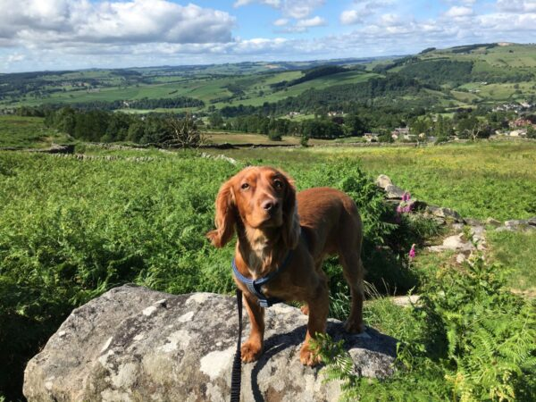 murphy dog in peak district holiday