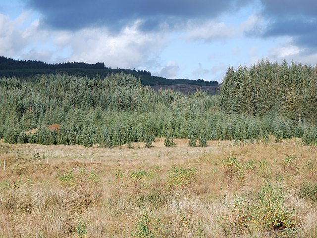natural woodland regeneration in argyll and bute scotland