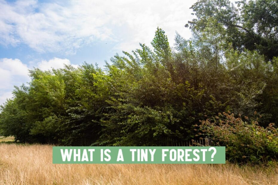 what is a tiny forest