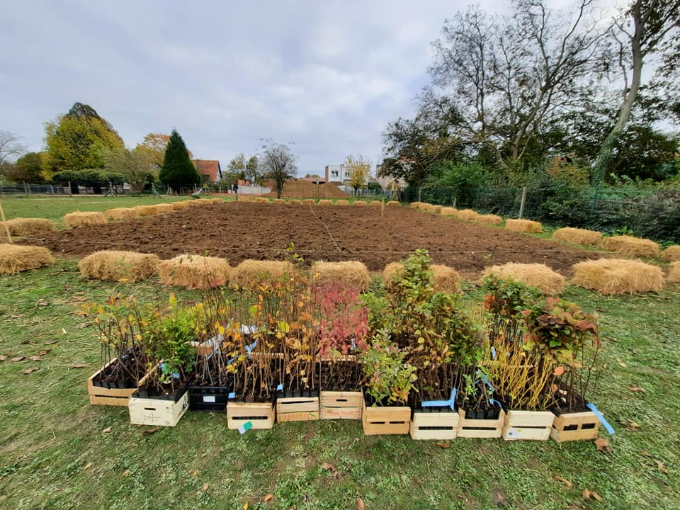 Tiny forest plot ready to be planted in europe