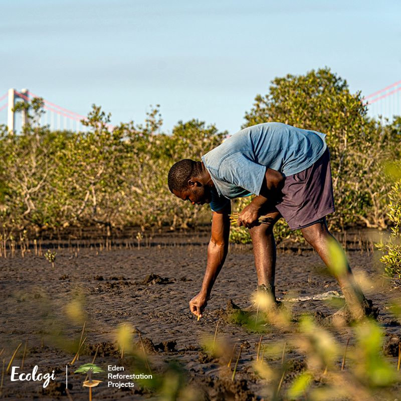 tree planting and forest restoration in madagascar