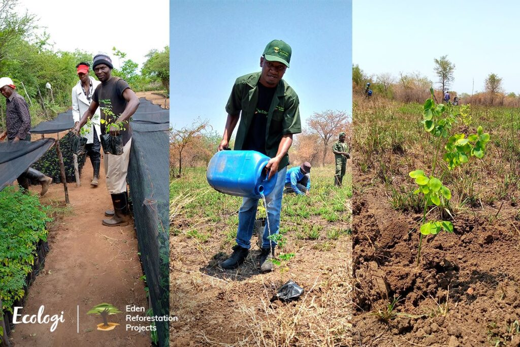 local people employed to plant trees in mozambique