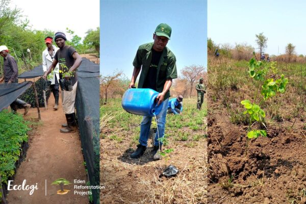 tree planting mozambique with eden forestation project