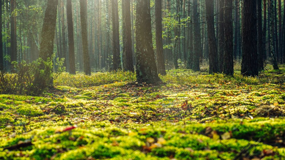 green forest floor with trees and leaves
