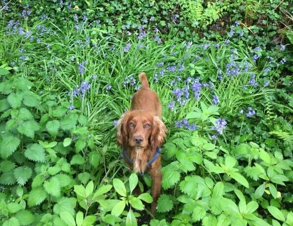murphy the dog in green environment leaves and bushes