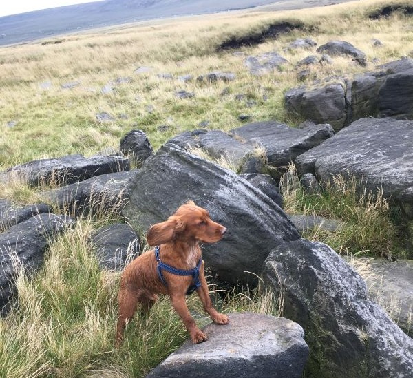 murphy the dog in peak district