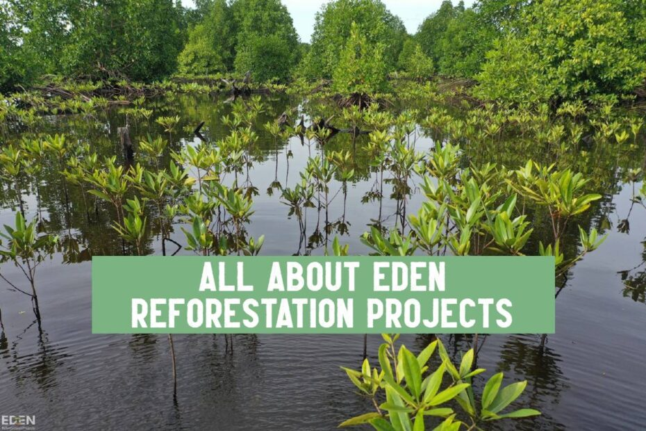 eden reforestation projects mangrove trees