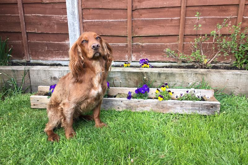 garden planter made from recycled a wooden pallet with murphy dog