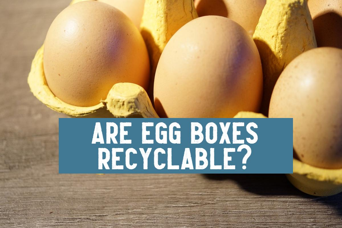 are egg boxes recyclable title