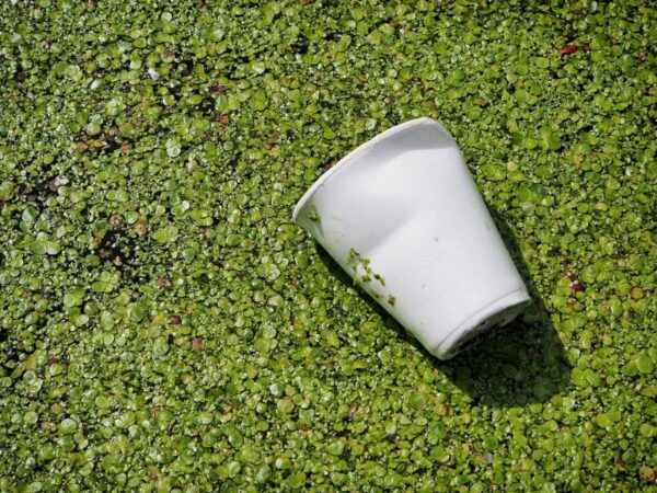 polystyrene waste cup in environment