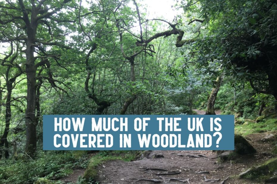 how much of the uk is covered in woodland