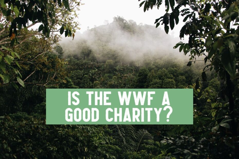is the wwf a good charity