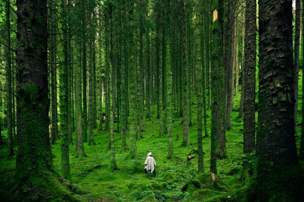 person walking in green woodland tall trees