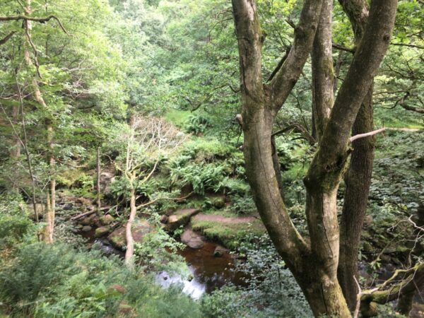 uk woodland with pool of water