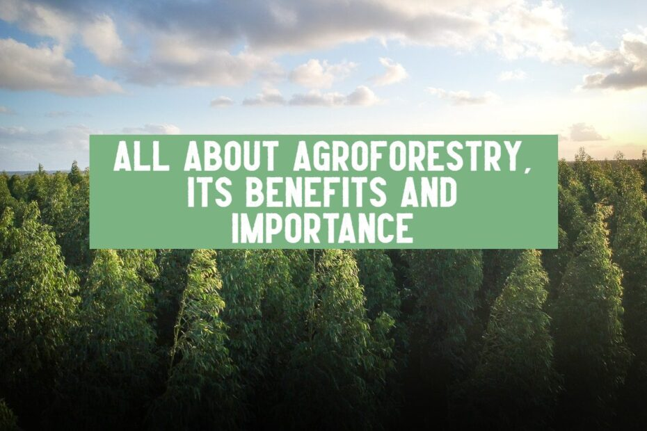 importance of sustainable agroforestry benefits