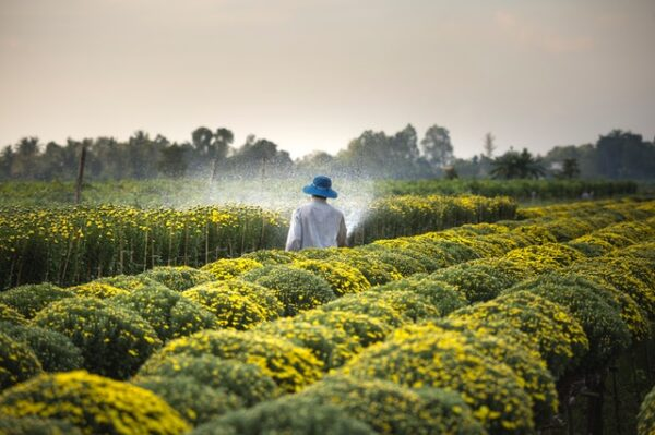 man spraying agriculture crops