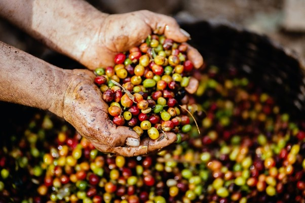 coffee beans in basket
