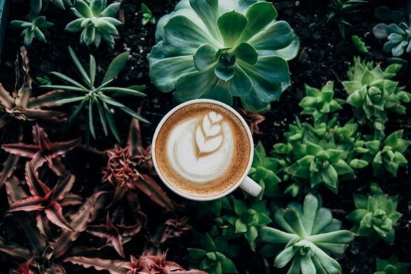 ethical coffee and plants